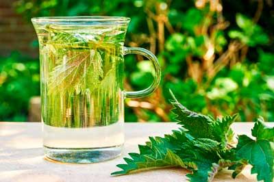 Целебные свойства крапивы, применение для лечения заболеваний - 9 эффективных рецептов