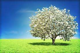 money_tree.jpg (11.73 Kb)