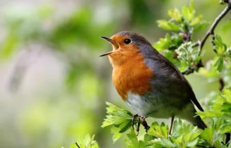 музыка для релаксации пение птиц